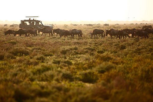 Great Migration Safari in the Serengeti, Tanzania