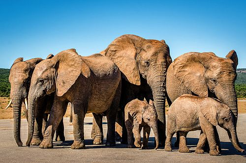 Elephants on Safari - South Africa Family Safari Package