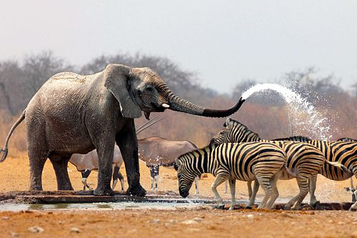 South Africa Vacation Package - Safari Tours - Sabi Sabi - Kruger - Travel Expert - honeymoon - south africa highlights