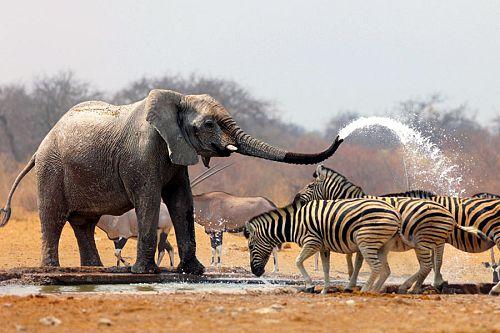 South Africa Vacation Package - Safari Tours - Sabi Sabi - Kruger - Travel Expert - honeymoon - south africa highlights