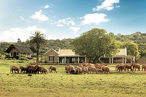 South Africa Garden Route Package - Gorah Elephant Camp Safari