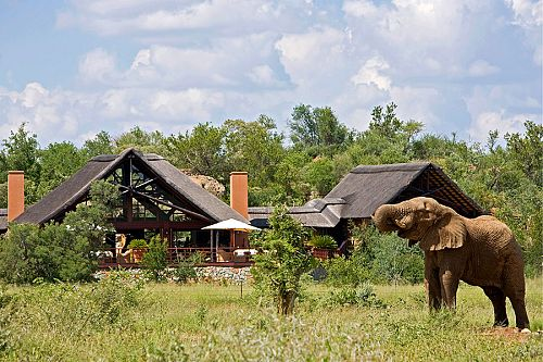 Elephant at Mateya Safari Lodge, Madikwe Game Reserve