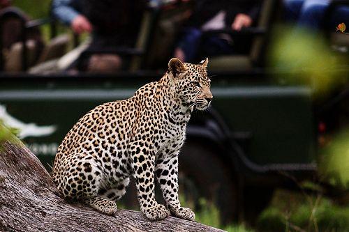 Africa Safari and Beach Vacation - Phinda Mountain Lodge