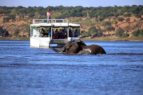 African Widlife Safari: Authentic Okavango Delta Adventure