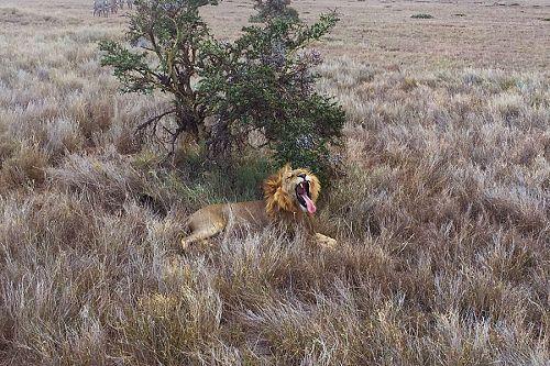 Trip to Africa - Kenya Wildlife Safari