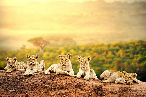 South Africa Safari Vacations - Cape Town Safaris