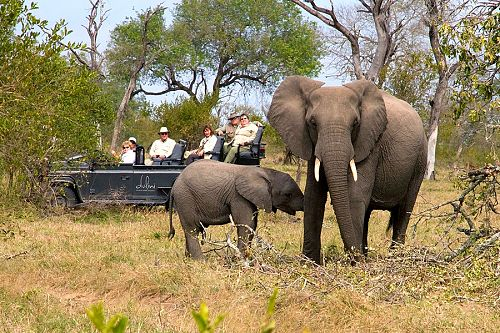 South Africa: Luxury Safari and Cape Town Package - Elephants in Kruger Park, South Africa