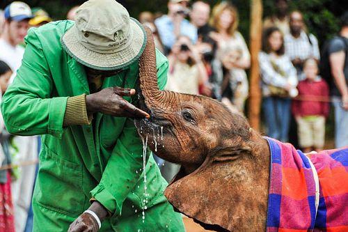Africa Safari Elephant Rides - Elephant Interactions