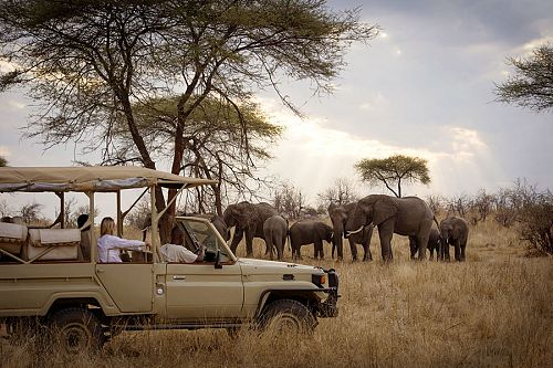 Tanzania Travel Packages - Herd of elephants on a game drive at Kigelia Ruaha Camp