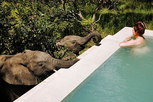 South Africa luxury travel packages - Elephant drinking from the pool at Royal Malewane safari lodge