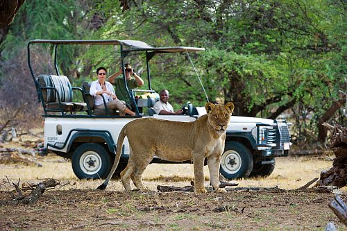 Classic Zimbabwe Safari Package - Little Makalolo Camp, Game Drives at Hwange National Park