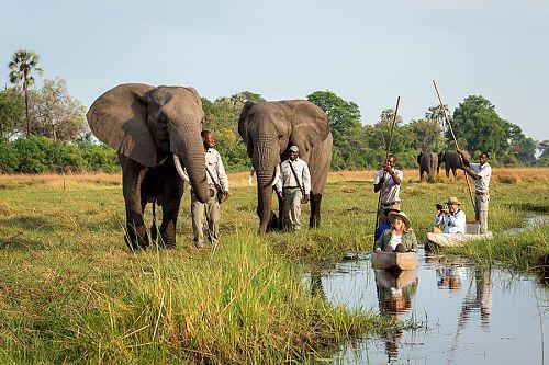 Okavango Delta Packages - Luxury Safari - Mokoro Safari and Walking with Elephants at Abu Camp
