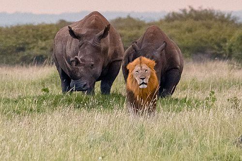 Big 5 Game Drive - Luxury South African Safari: andBeyond Phinda and Sabi Sands