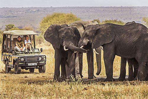 Tusker Elephants on Tarangire Game Drive - Little Chem Chem - Tanzania Highlights: Tarangire, Ngorongoro, and Serengeti Safari