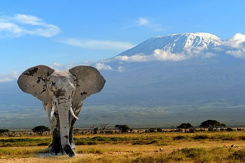 Elephant in Front of Mt Kilimanjaro - Amboseli National Park Kenya - Luxury Air Safari: Kenya Adventure Package
