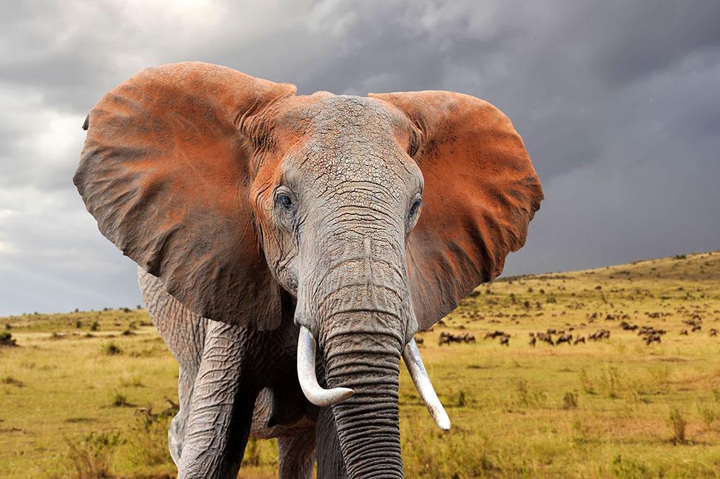 Africa safari packages - Africa travel blog
