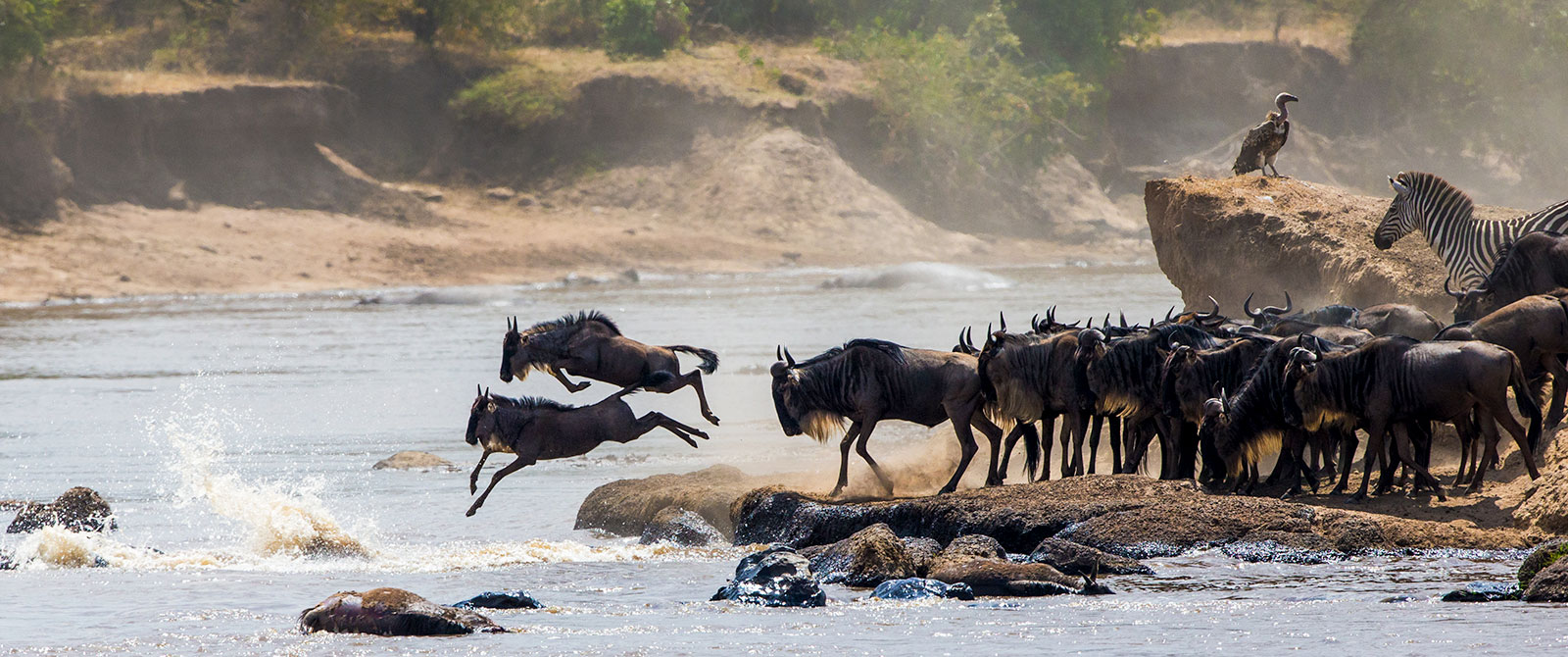 Wildebeest River Crossing - Great Migration Safaris in Kenya
