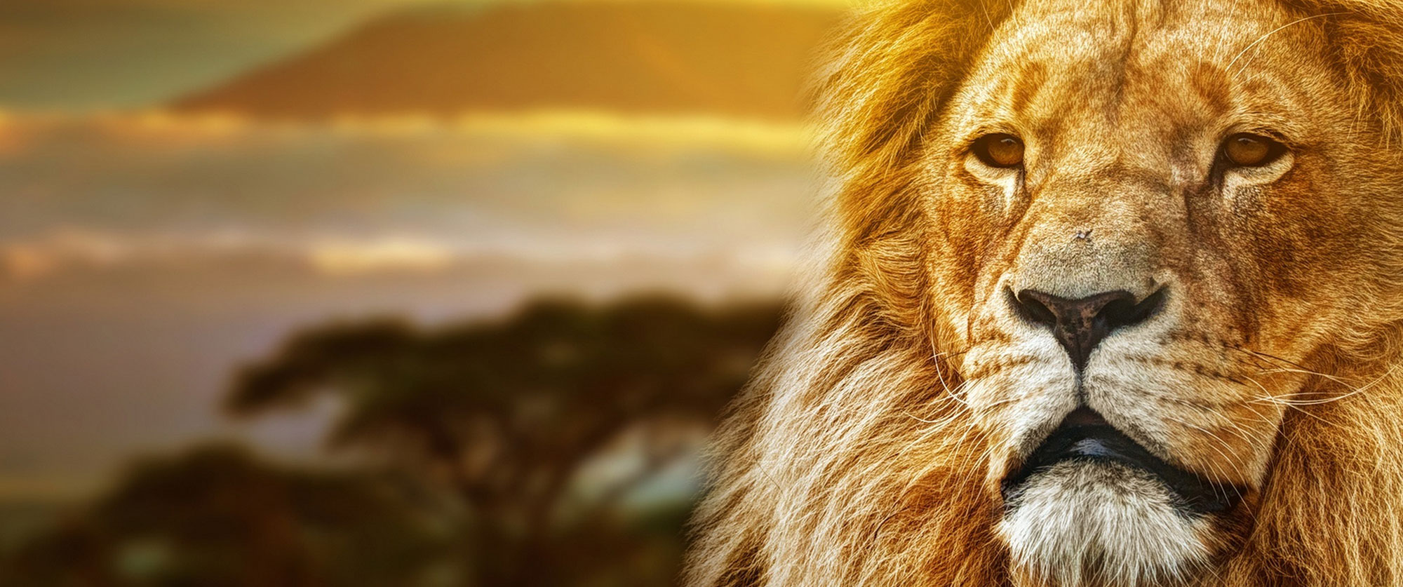 Tanzania - highlights - safari