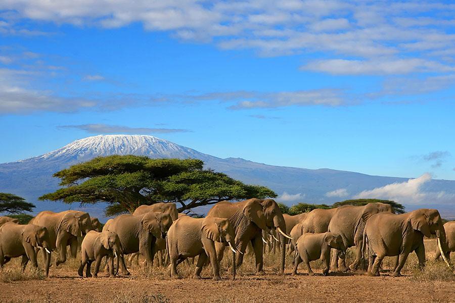 Western Tanzania - Tanzania - Safari