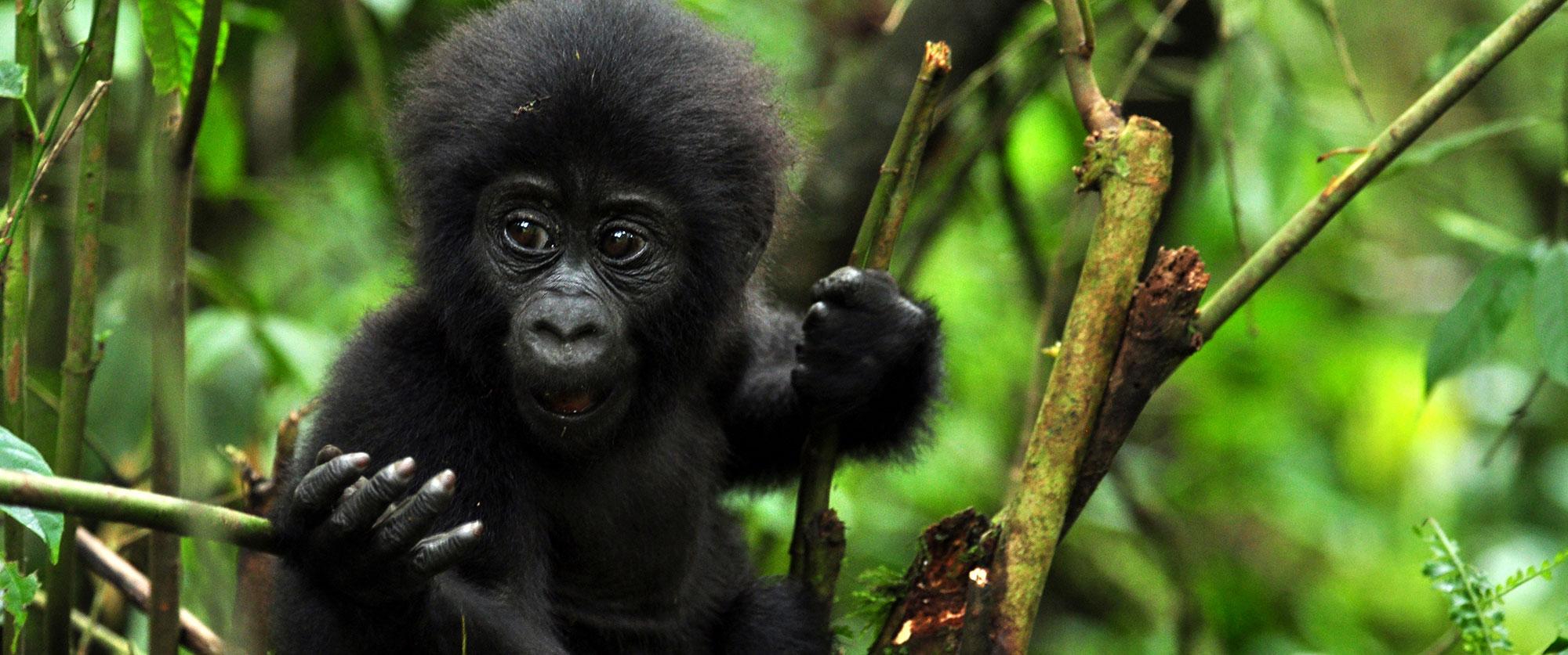 Uganda - Travel - Specialist