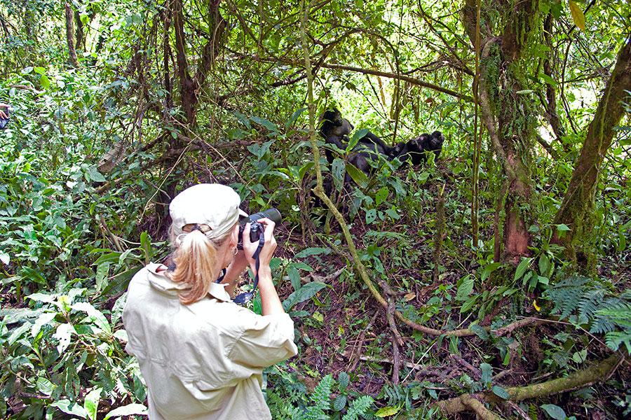 Gorilla Trekking - Rwanda - Uganda - Africa - handcrafted - vacation
