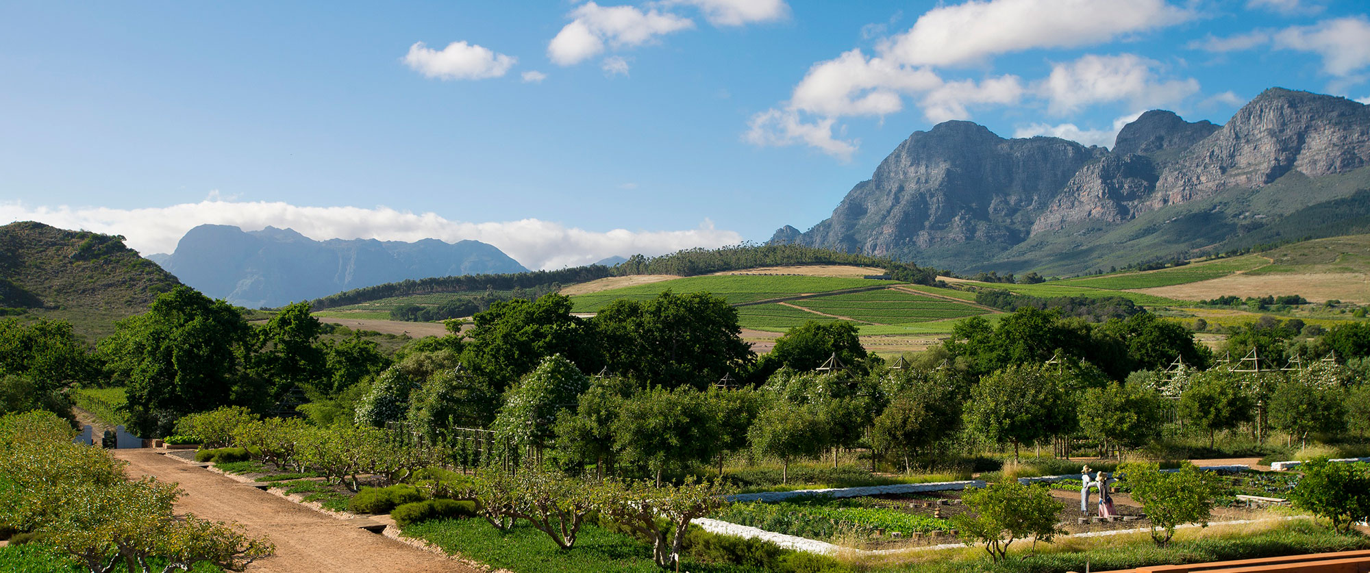 Best of South Africa: Safari, Cape Town, Winelands