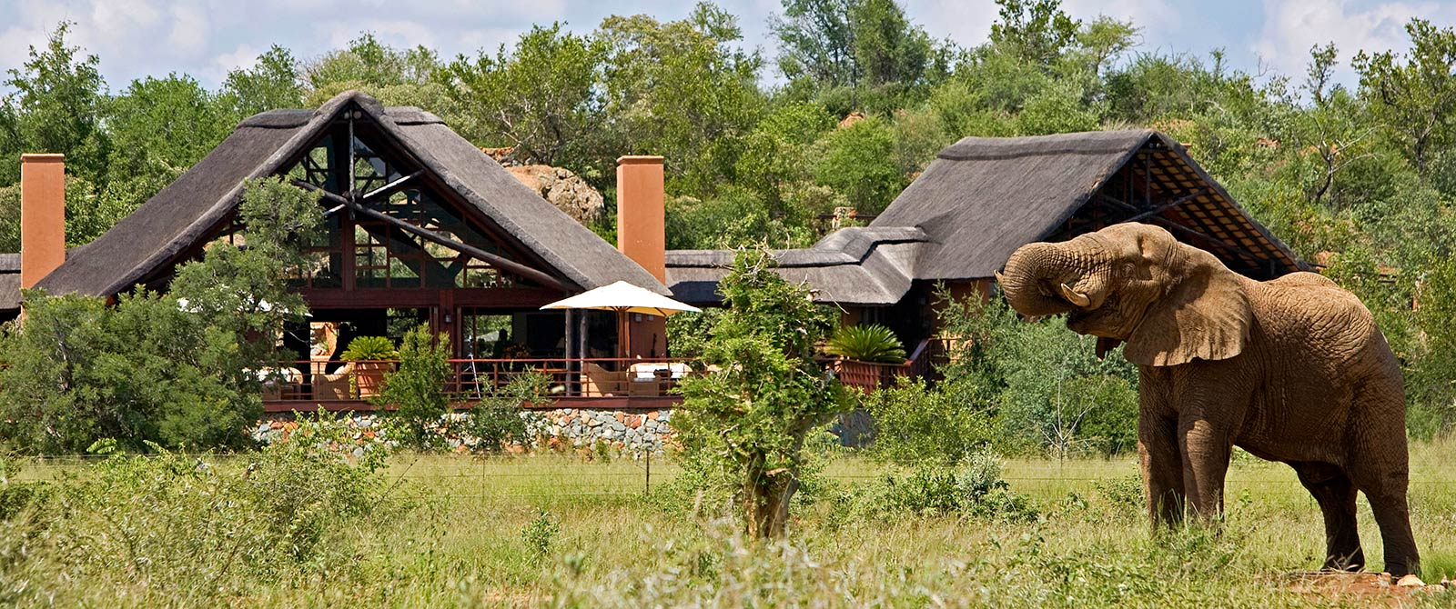 Elephant at Mateya Safari Lodge, Madikwe Game Reserve