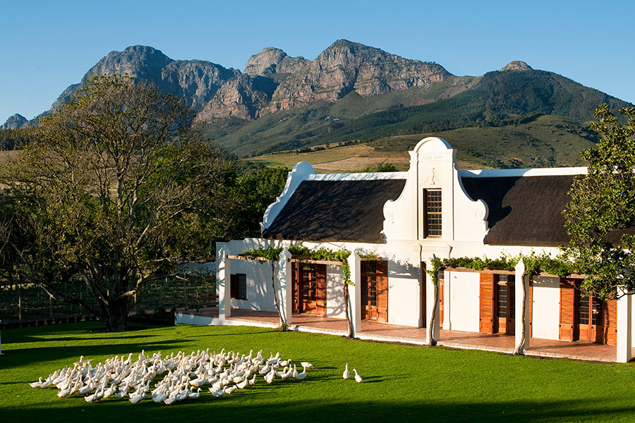 The future of south african wine africa endeavours for Jardin winery south africa