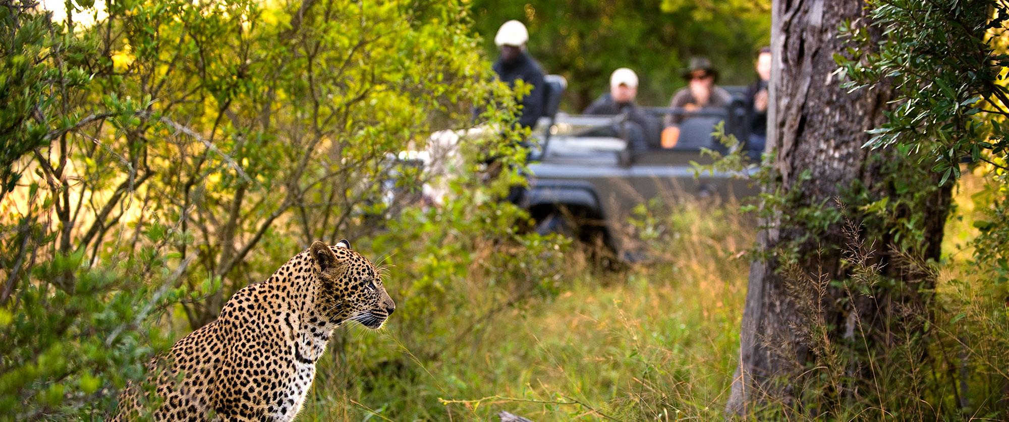 South Africa Kruger safari - Lion Sands Ivory Lodge safari
