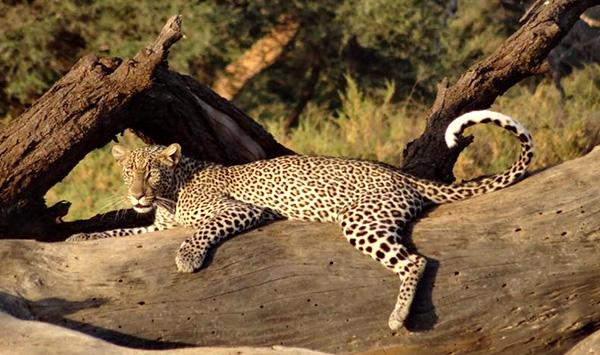 Africa travel agent - Katie Kenya safari