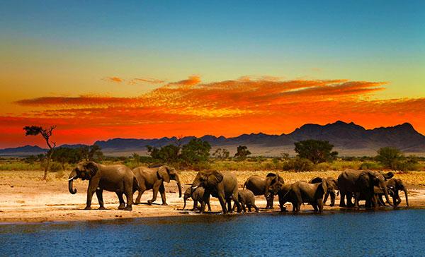 Custom Africa Wildlife Safari
