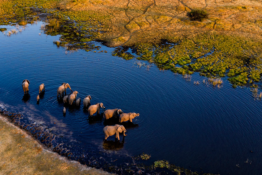 Botswana Safari & Vacation Packages - Custom Luxury Tours