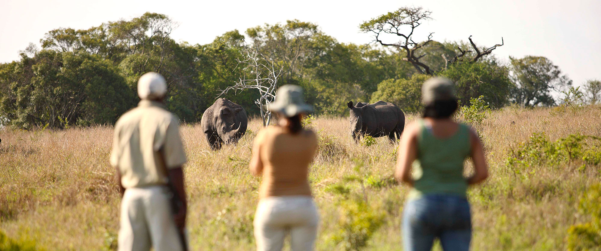 Africa Vacation Packages - African wildlife safari