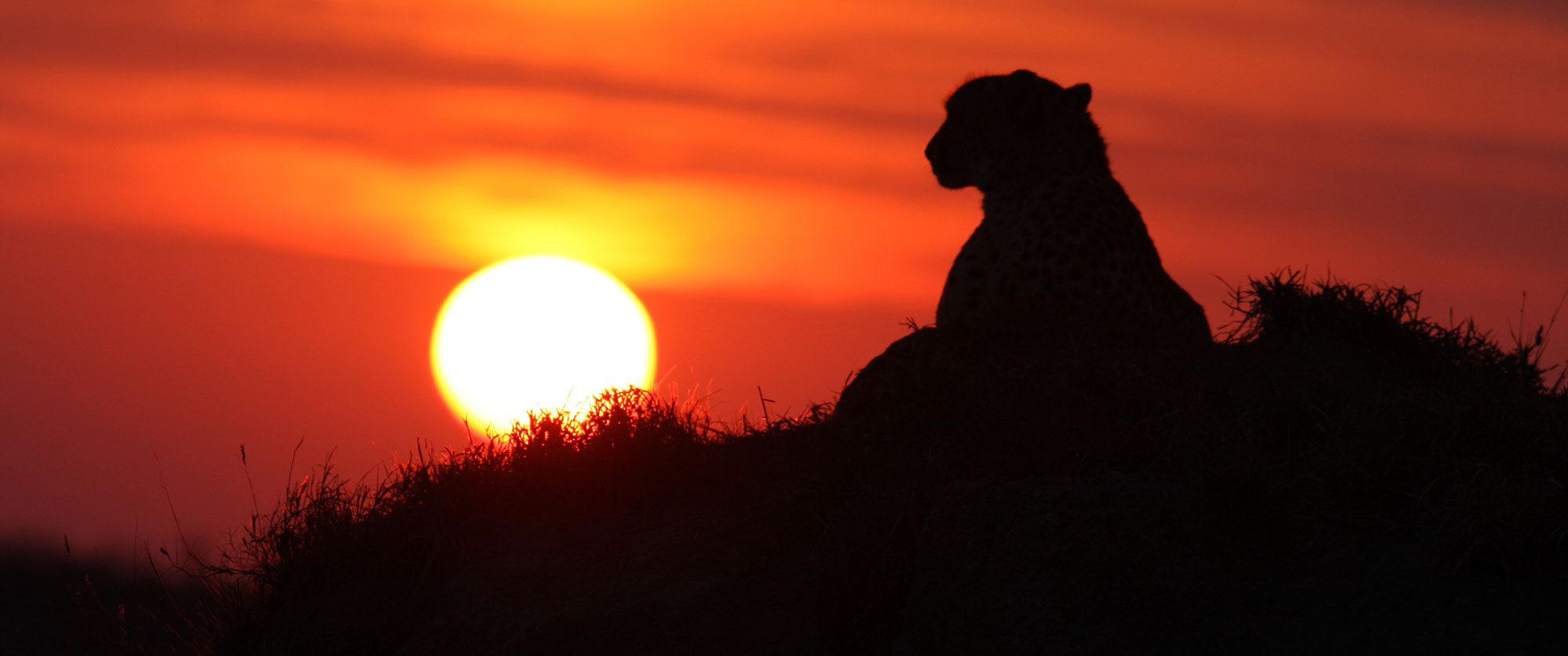 Bucket List Safari: Chobe, Okavango, and Kruger