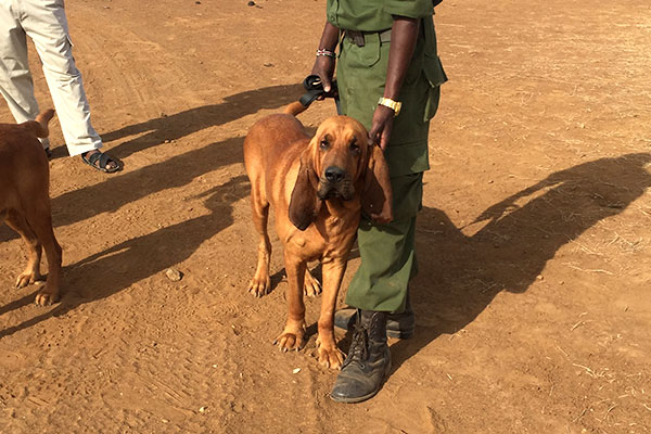 Trip to Africa - Kenya Wildlife Safari - Anti Poaching Dog