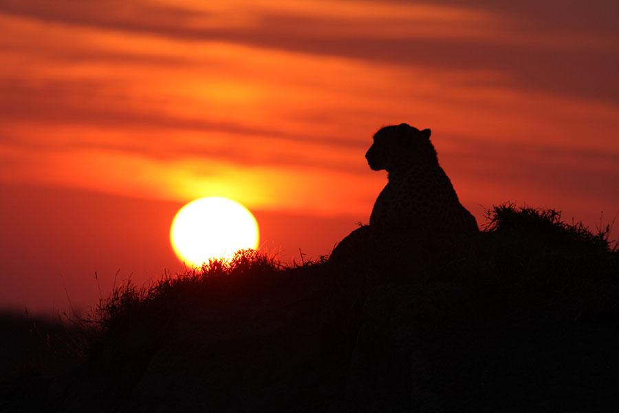 Bucket List Safari: Chobe, Okavango, and Kruger