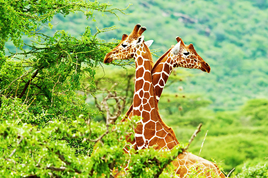 African Safari - What to Know