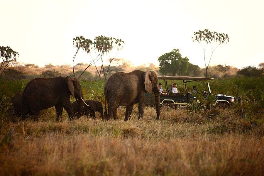 All Inclusive Africa Vacations - Game Drives