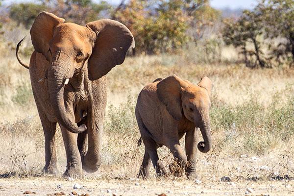 Victoria Falls Elephant Rides - Elephant Interactions