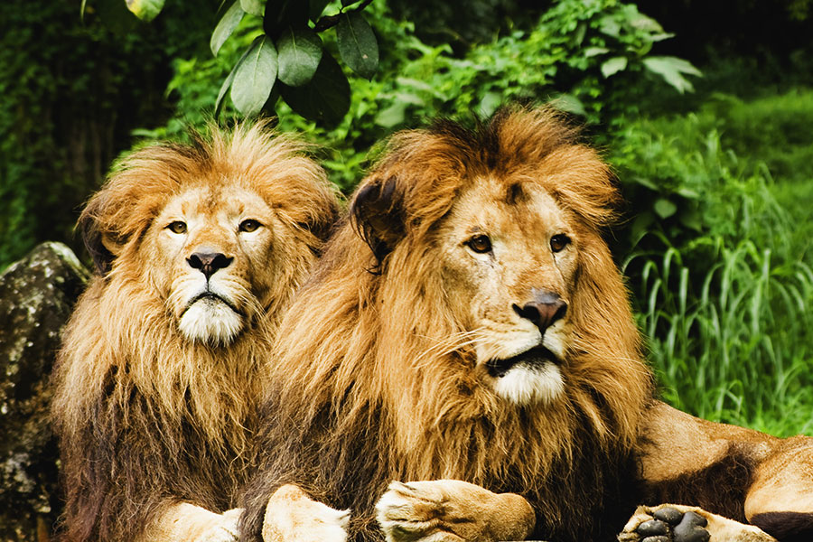 Africa safari packages - Frequently asked questions