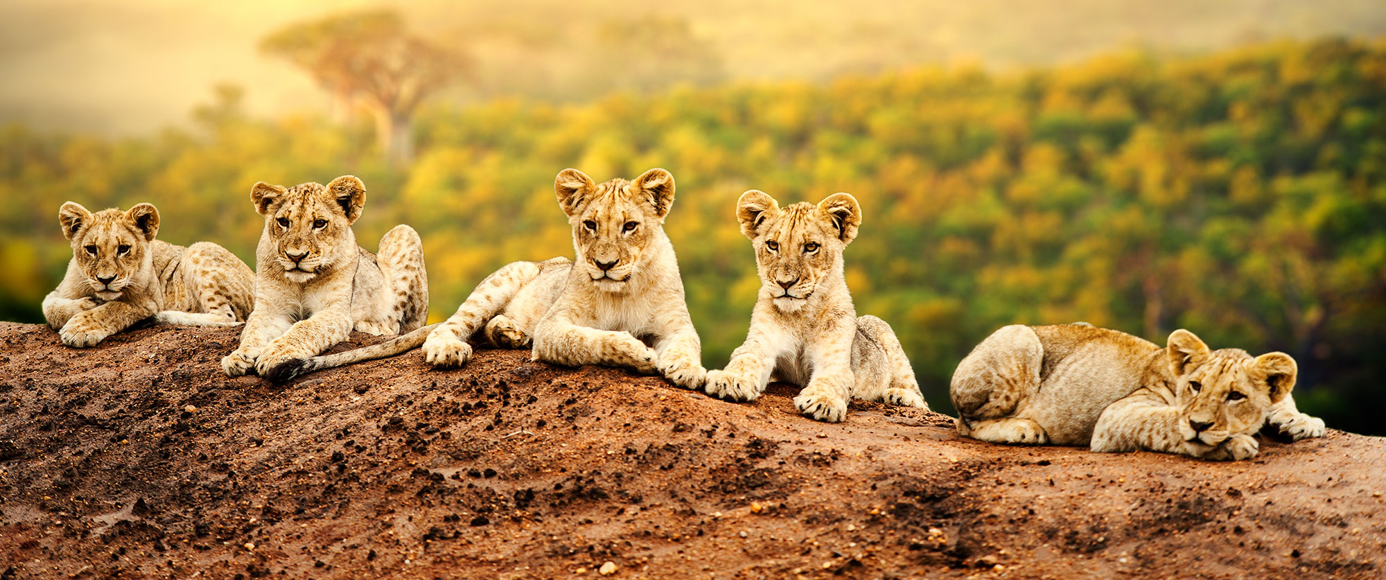 South Africa Travel Packages