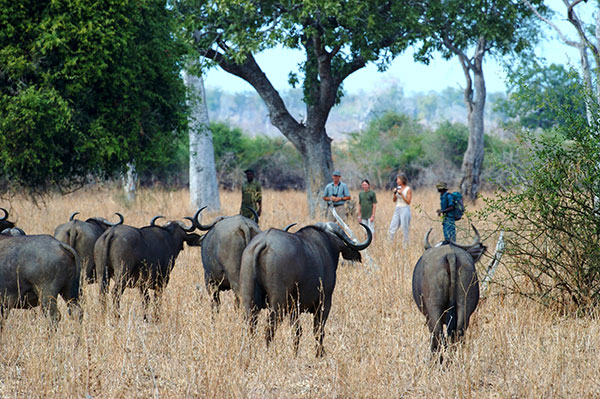 Remote Africa Safaris in Zambia