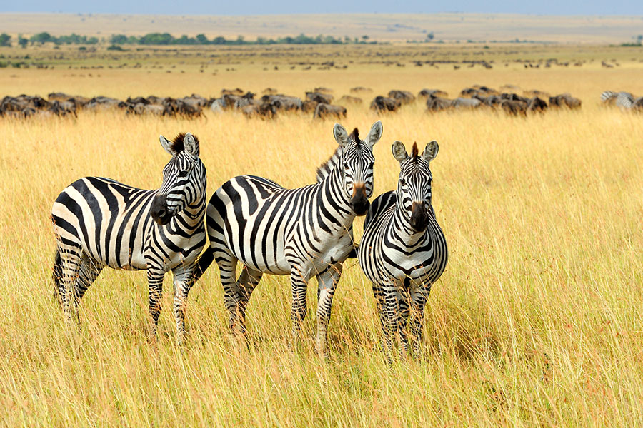 East Africa Safari Visas and Travel Requirements