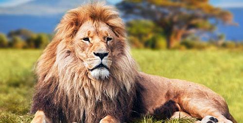 Africa Safari Travel - Big 5 Wildlife Safari - Handcrafted Custom Journeys to Africa