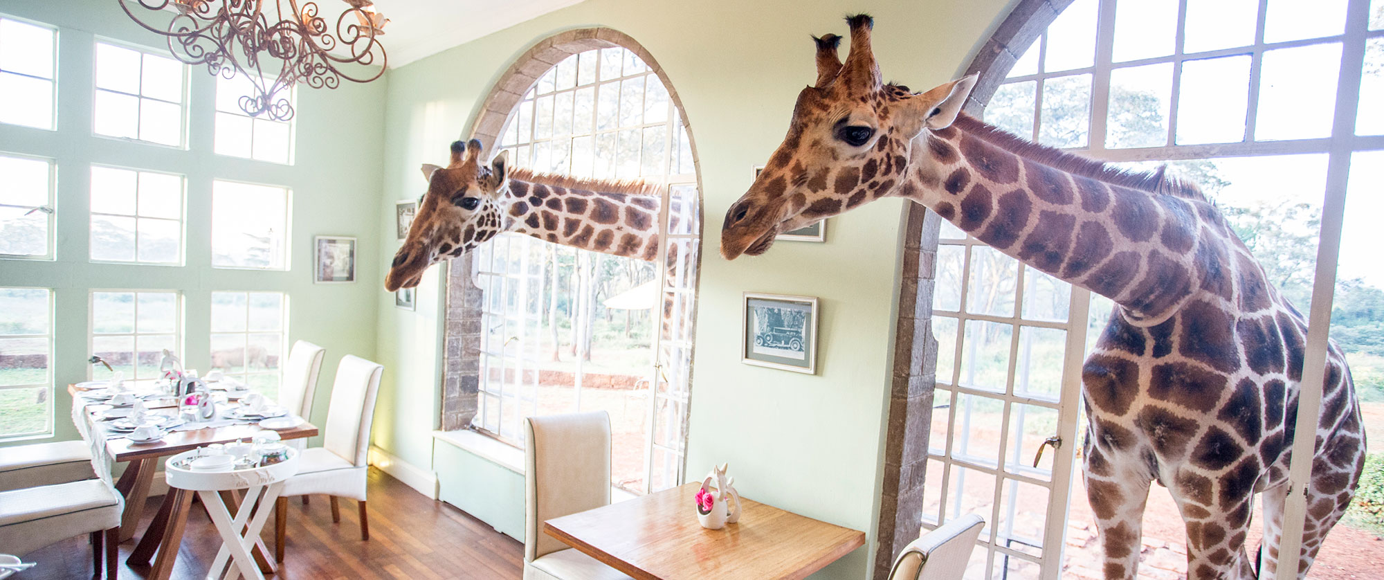 Classic Kenya Luxury Safari Package - Giraffe Manor Kenya
