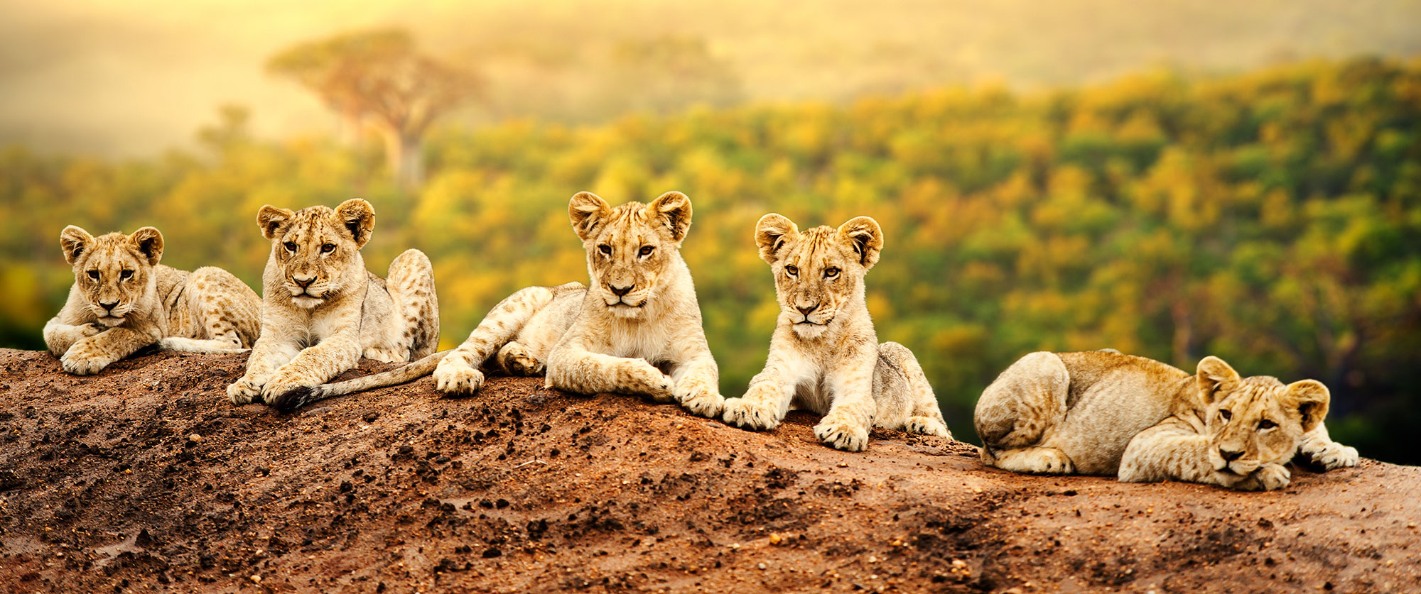 South Africa Safari and Wine Vacation
