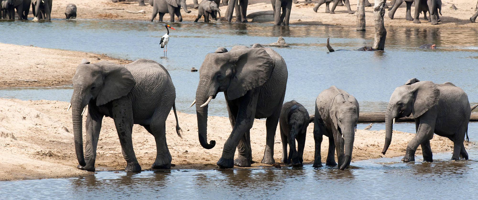 South Africa Safari and Wine Vacation - Elephants at Ulusaba Private Game Reserve