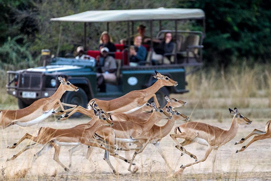 Wildlife Safari Zambia - Zungulila Bushcamp, Remote Zambia Safari