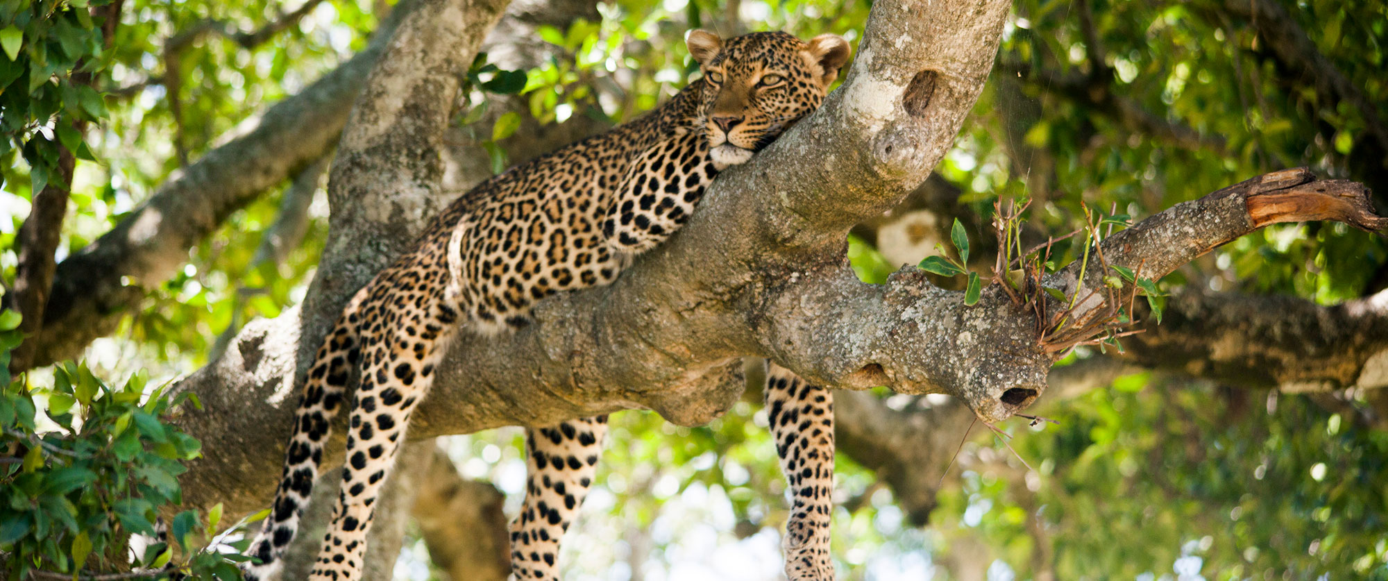 Best of African Luxury: Sabi Sands Safari and Beach Getaway - Kruger Sabi Sands