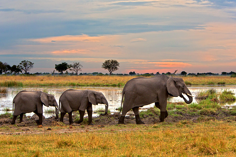 Botswana Safari Tour: Peak Season Okavango Adventure - Elephants in the Okavango Delta